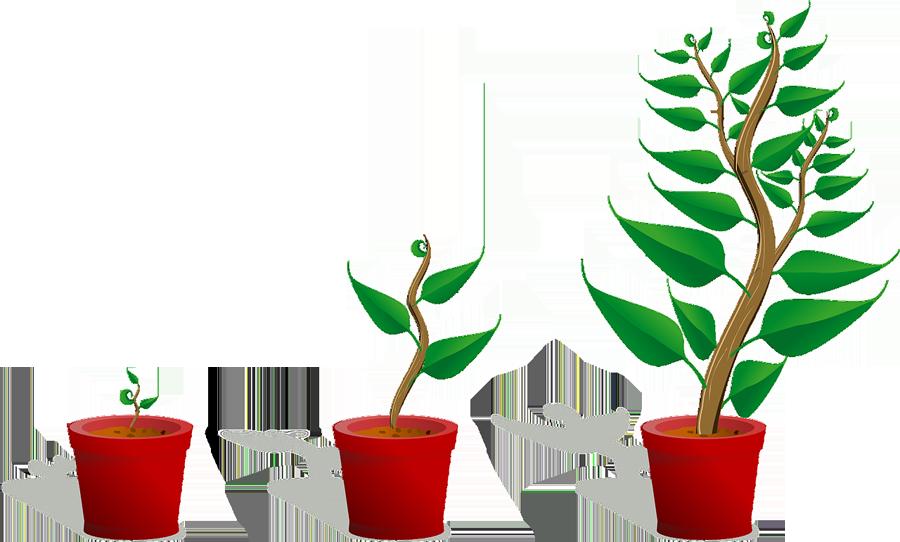 Plante qui grandit