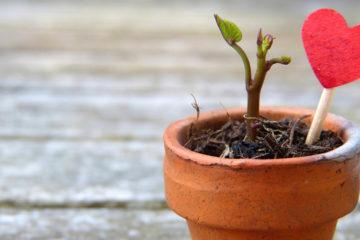 Pousse de plante en pot avec coeur